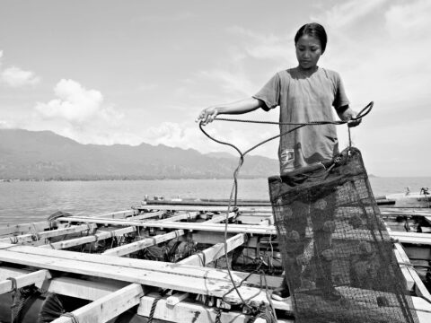 Pearlfarmer with holding nets of sustainable pearl oysters
